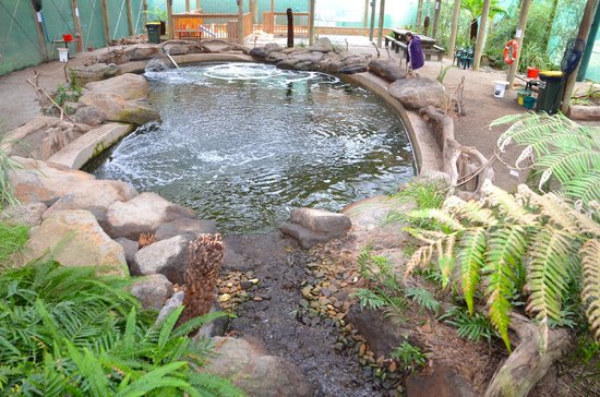 Rhyll Trout and Bush Tucker Farm: Rain forest breeding pool