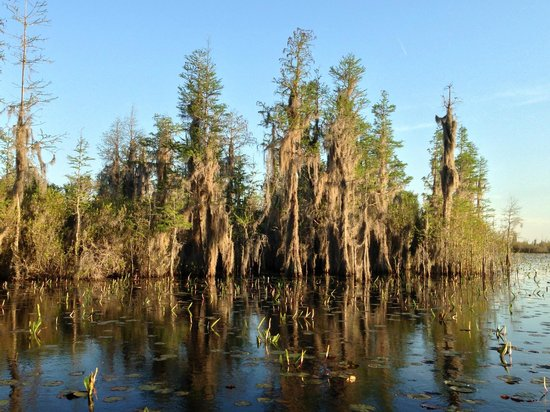 Okefenokee Swamp Park: In the swamp