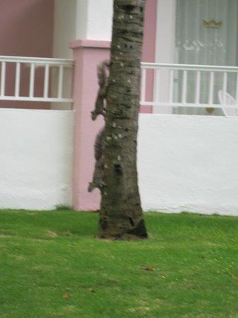 Hotel Riu Playacar: bons amigos no hotel
