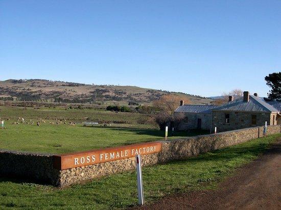 Ross صورة فوتوغرافية
