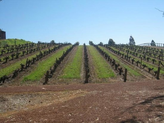 Orchard Glory Farm Resort: Vineyard