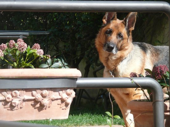 B&B La Luna: {My puppy Luna ... we love German shepherd}