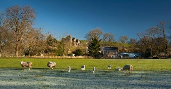 Holmhead Guest House: Sheep in front of Holmhead