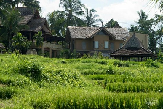 Wapa di Ume Resort and Spa: From the rice fields looking back