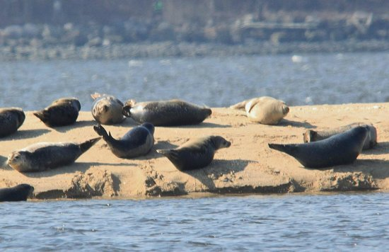 Poet's Lounge Sailing Charter -  Day Tours: SEAL WATCH SAILING CHARTER / APRIL AND MAY