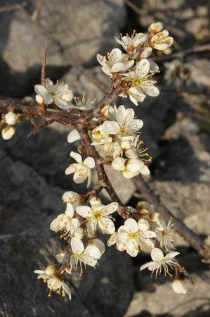Burren Yoga Retreats: Burren  flower