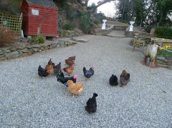 """The Old Coach House: our """"friends"""" after spreading crisp crumbs"""