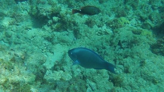 Native Spirit Scuba: snorkeling