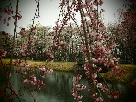 Umamizuka Park : 馬見塚公園