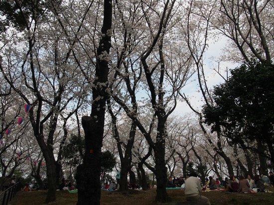 Asukayama Park: 飛鳥山公園