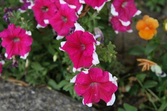 Quinta Dom Jose: garden flowers