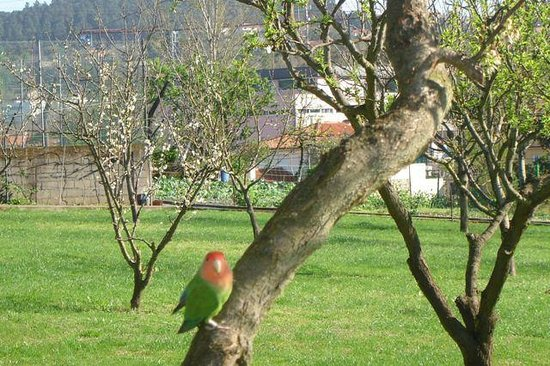 Quinta Dom Jose: garden