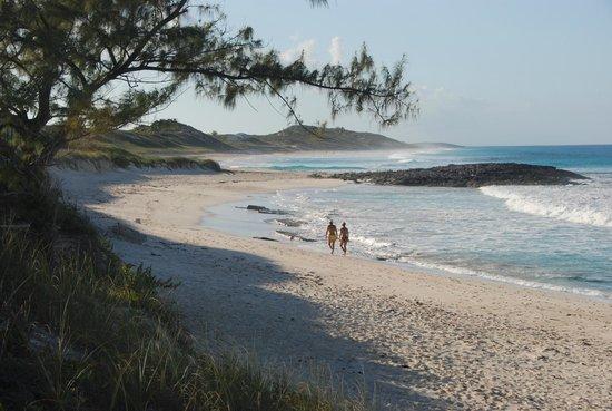 Hotel Higgins Landing: Beach walkers