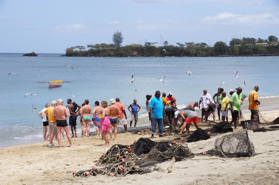 Turtle Beach by Rex Resorts: Seine fishing from Courland/Turtle Beach