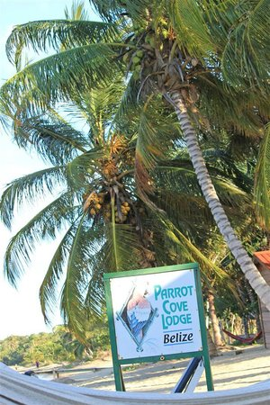 Parrot Cove Lodge: Coconut trees really do grow on the beach in paradise.