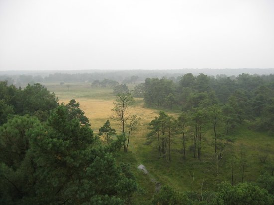 Free photo: Vierhouten, Heide, Veluwe - Free Image on Pixabay ...