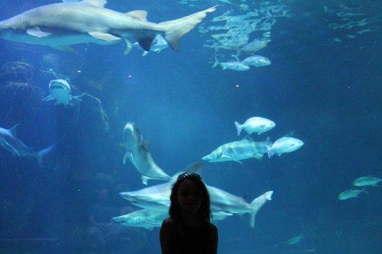Virginia Beach Aquarium Movie Times