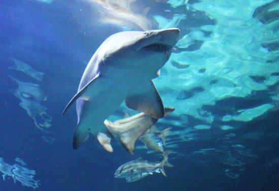 Viewing Stations Picture Of Virginia Aquarium Marine Science Center Virginia Beach