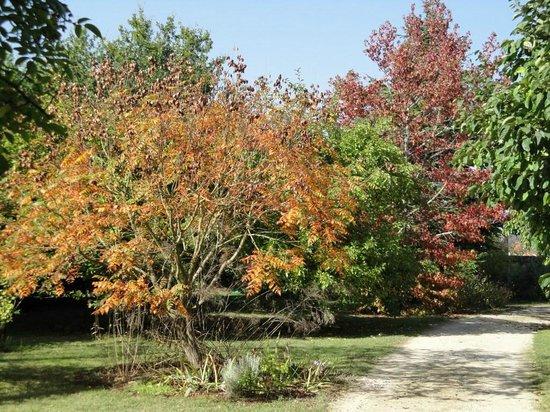 L'Aubepine: jardin en automne