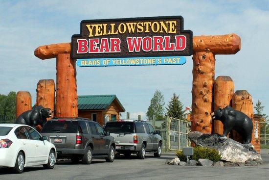 黄石公园熊世界