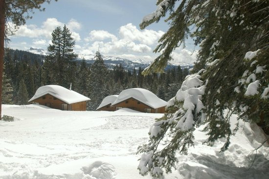 Montecito Sequoia Lodge & Summer Family Camp: Sequoia view