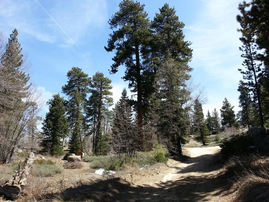 Big Bear Frontier Cabins: Trail