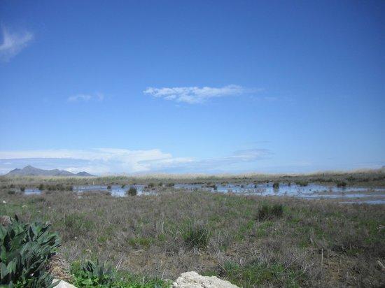 Parque natural s'Albufera de Mallorca: Great bird watching spot - mountains in the distance