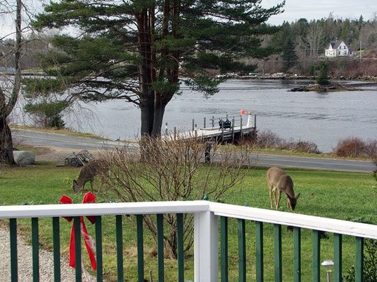 Anchorage House & Cottages: Lots of local wildlife