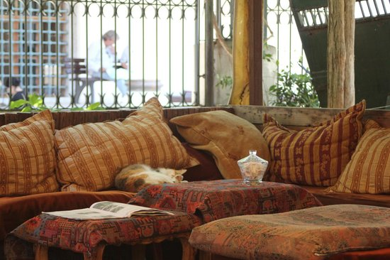 Basileus Hotel: A place for tea with ever present cats at the artist shops