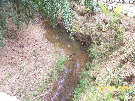 La Vega Estate : A stream at La Vega