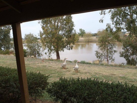 Paradise Lakes Motel: The view from the back door