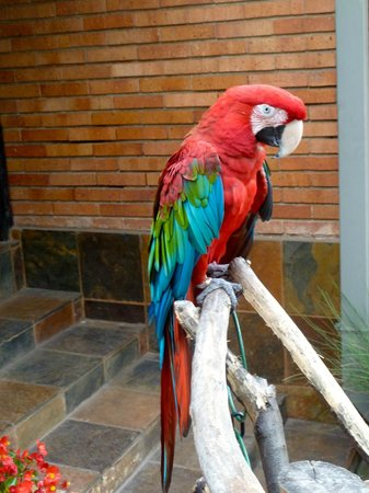 Sunrock Guesthouse: Resident parrot