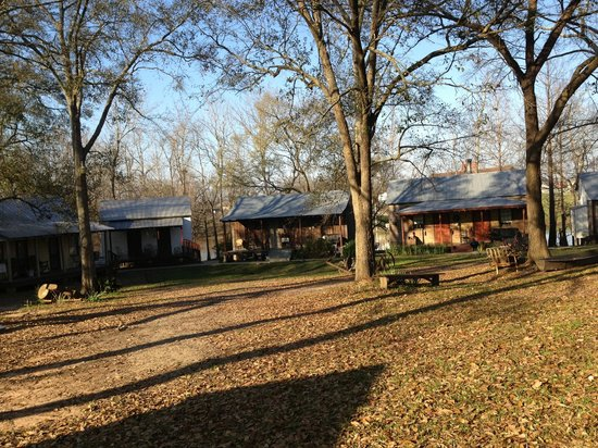 Bayou Cabins: Cabins in the morning