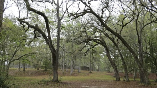 Colonial Dorchester State Historic Site : Arching tress, hills and gentle colors in a light rain - no crowds!