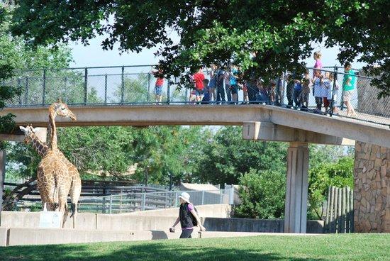 Abilene Zoo: Bridge where you can feed the giraffes.