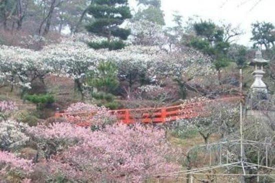 Nakayama-dera: nakayamaderateien