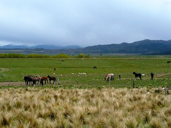 Estancia La Alejandra: Wild horses on the Estancia