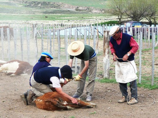 Estancia La Alejandra: Local Gauchos doing their thing