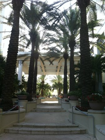Loews Miami Beach Hotel: Palm trees