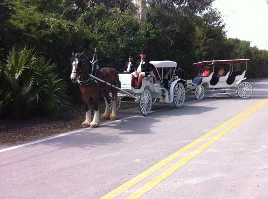 Island horse drawn carriages Islamorada fl: weddings, events or romantic moments