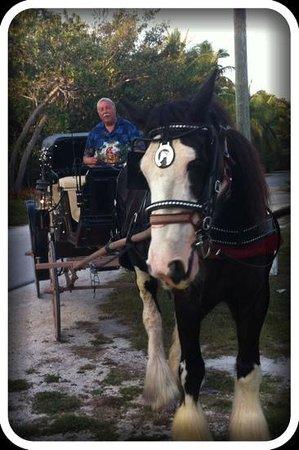 Island horse drawn carriages Islamorada fl: anniversaries, tours, shuttle service
