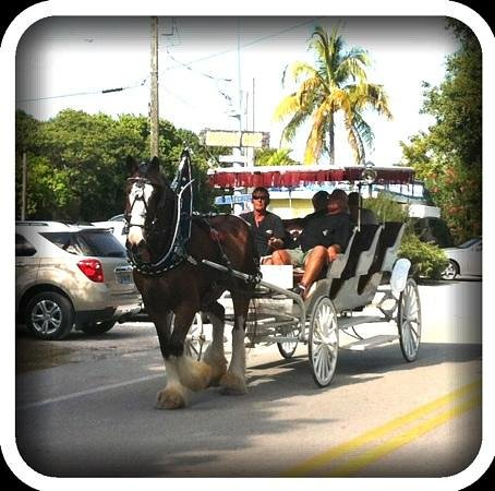 Island horse drawn carriages Islamorada fl: special events- dinner-sight seeing
