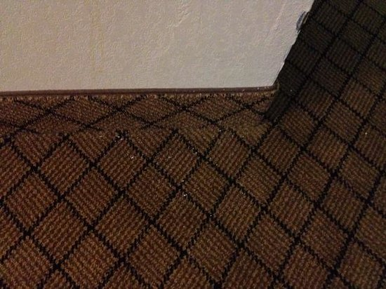 Comfort Inn Clarksville: Needs vacuuming.