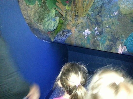 Penguin Encounter Picture Of Ripley 39 S Aquarium Of The