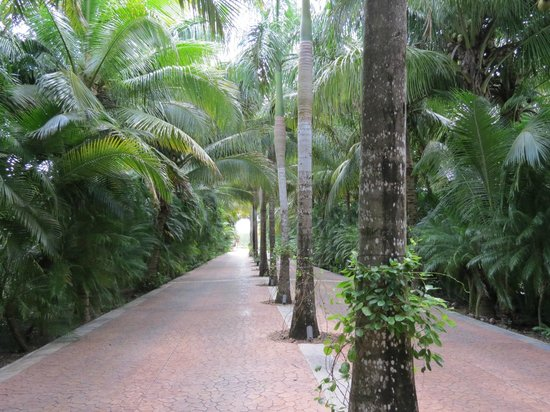 Presidente Inter-Continental Cozumel Resort & Spa: The driveway