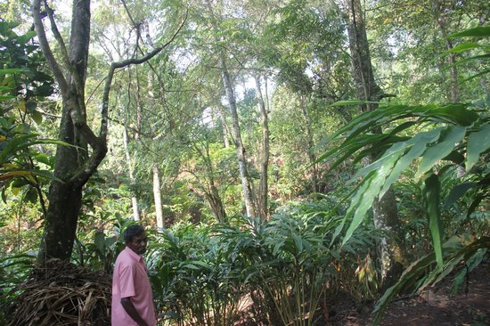 Kaivalyam Retreat: spice plantations