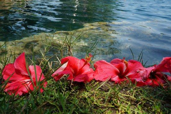 03 naturaleza hermosa picture of restaurante cenote azul for Naturaleza hermosa