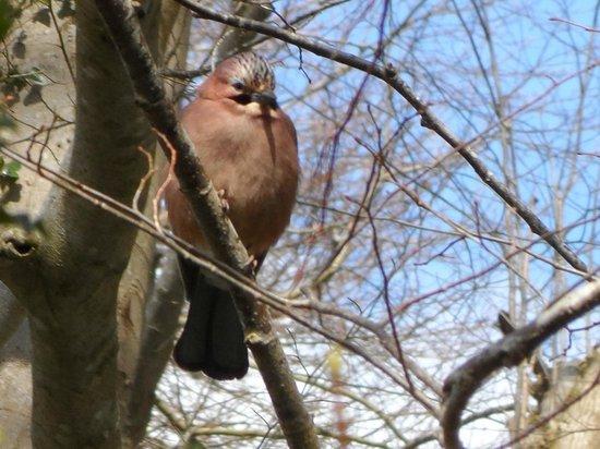 Birdlife at Castlewellan Forest Park
