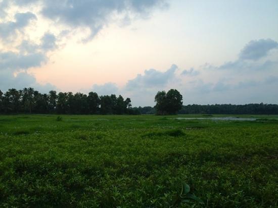 Pattarumadom Ayurveda: meditation meadow!!! love love love