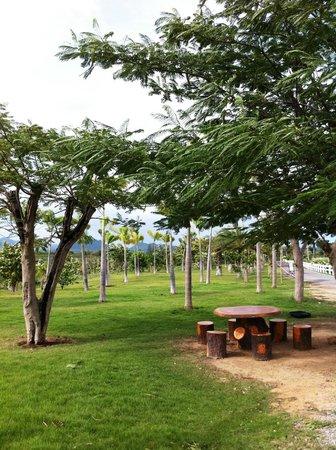 Chang Hua Man Royal Project: Trees